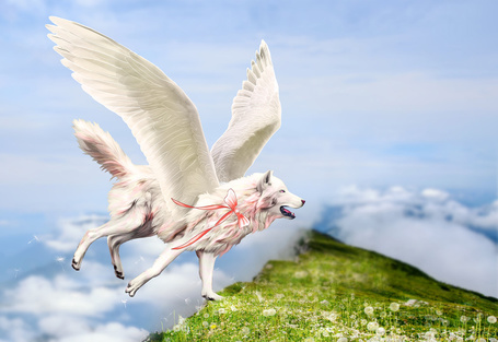 Фото Крылатый волк опускается на вершину горы, на которой растут одуванчики, работа DarkBeforeDawn23