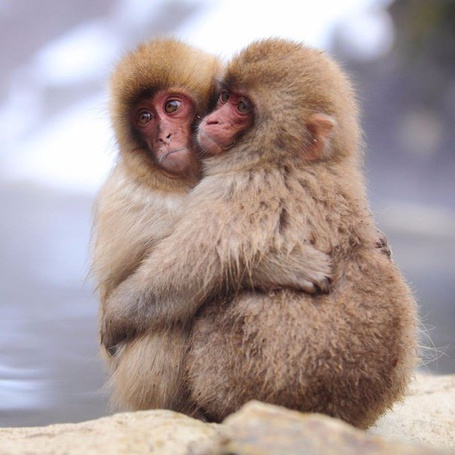 Фото Две обезьянки сидят в обнимку