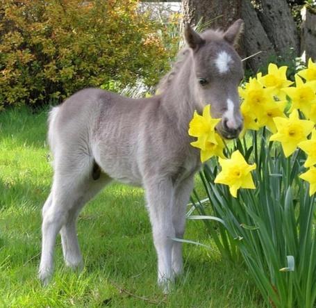 Фото Маленький ослик на лужайке на фоне цветов