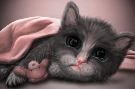 Фото Кот с игрушечным медведем, by lenyca