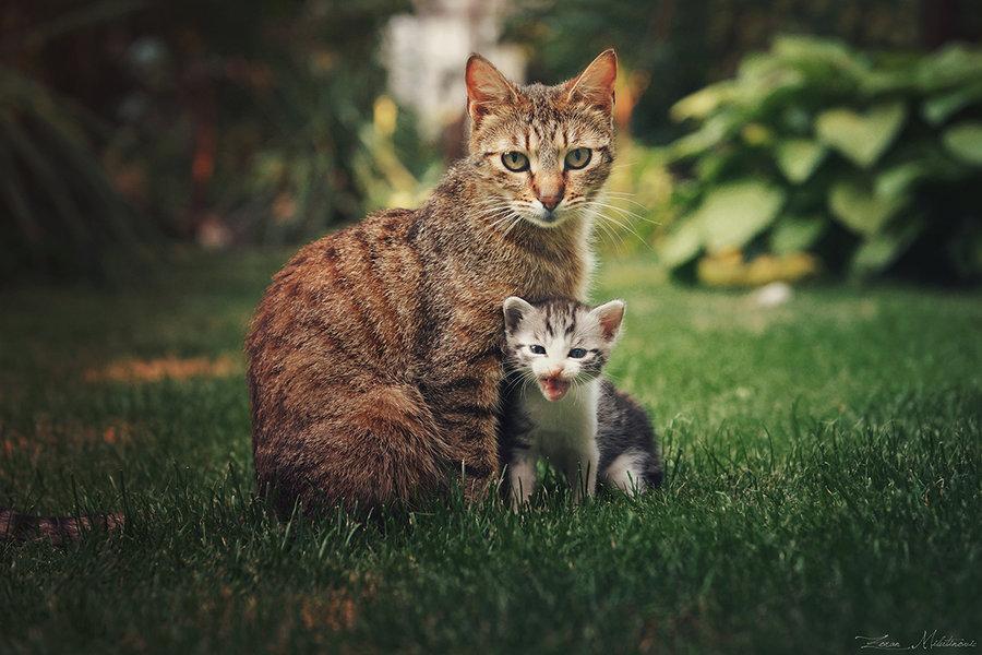 Фото Кошка с котенком сидят на зеленой траве, by Zoran Photo