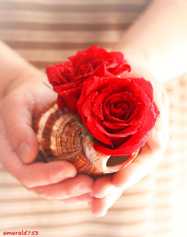 Открытка роза в ладонях, картинки