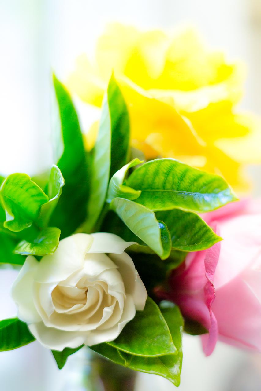 Тэги красивые макро цветы