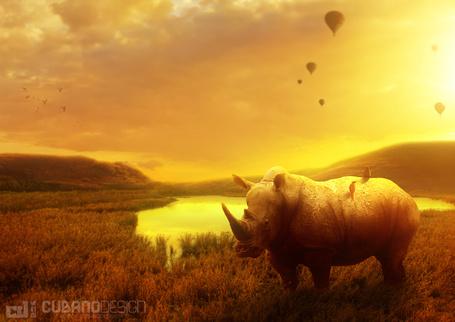 Фото Носорог, на спине которого сидят птицы стоит в траве на фоне закатного неба, в котором парят воздушные шары