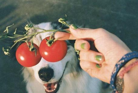 Фото Девушка приставила собаке два помидора