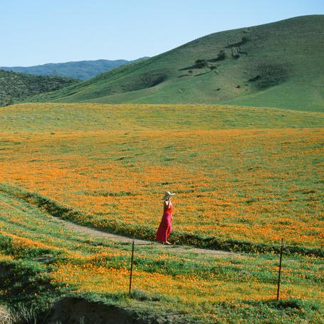 Фото Девушка идет по тропинке в поле