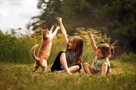 Фото Девочки играют с рыжим котом на лужайке