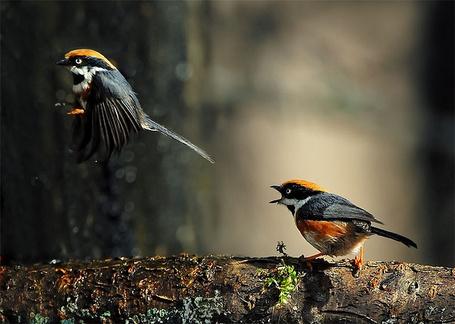 Фото Две птицы, одна сидит на ветке, другая перед ней парит
