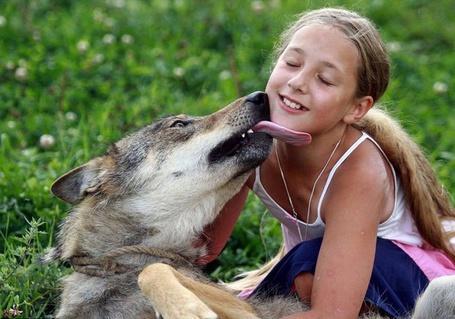 Фото Волк облизывает девочку