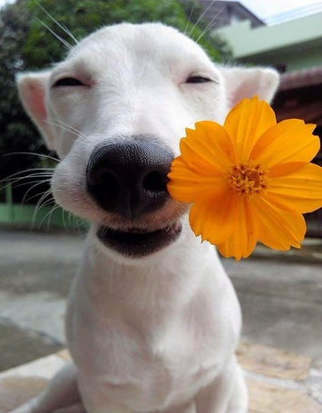 Фото Улыбающаяся собака с оранжевым цветком в зубах