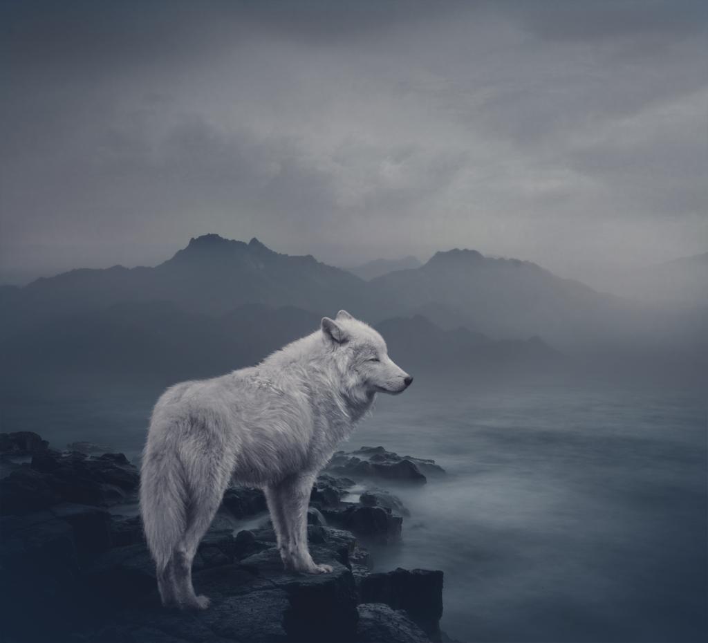 есть картинки уходящего волка комфортные