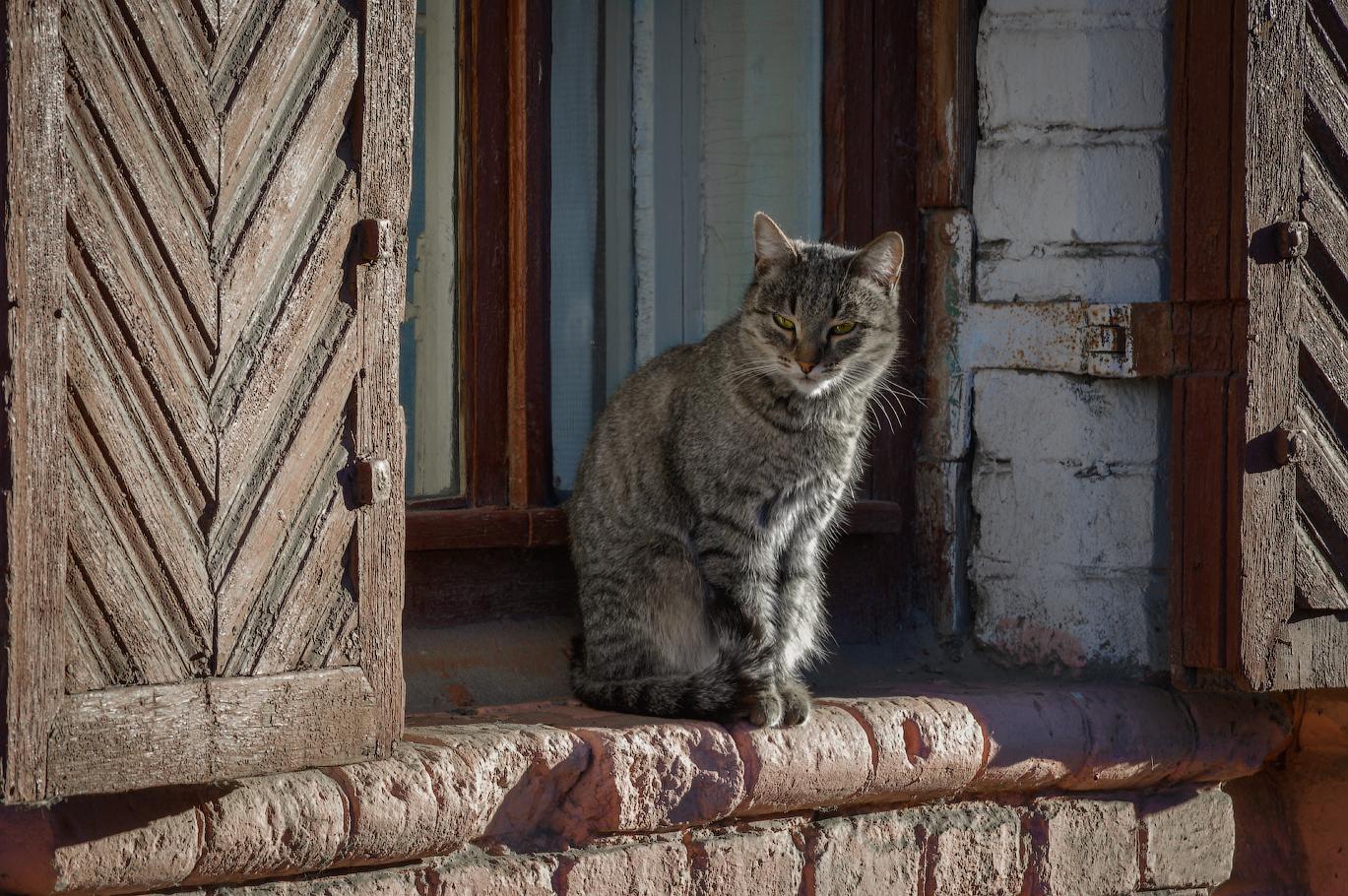 плагин котенок на крыльце картинки полагают, что козленка