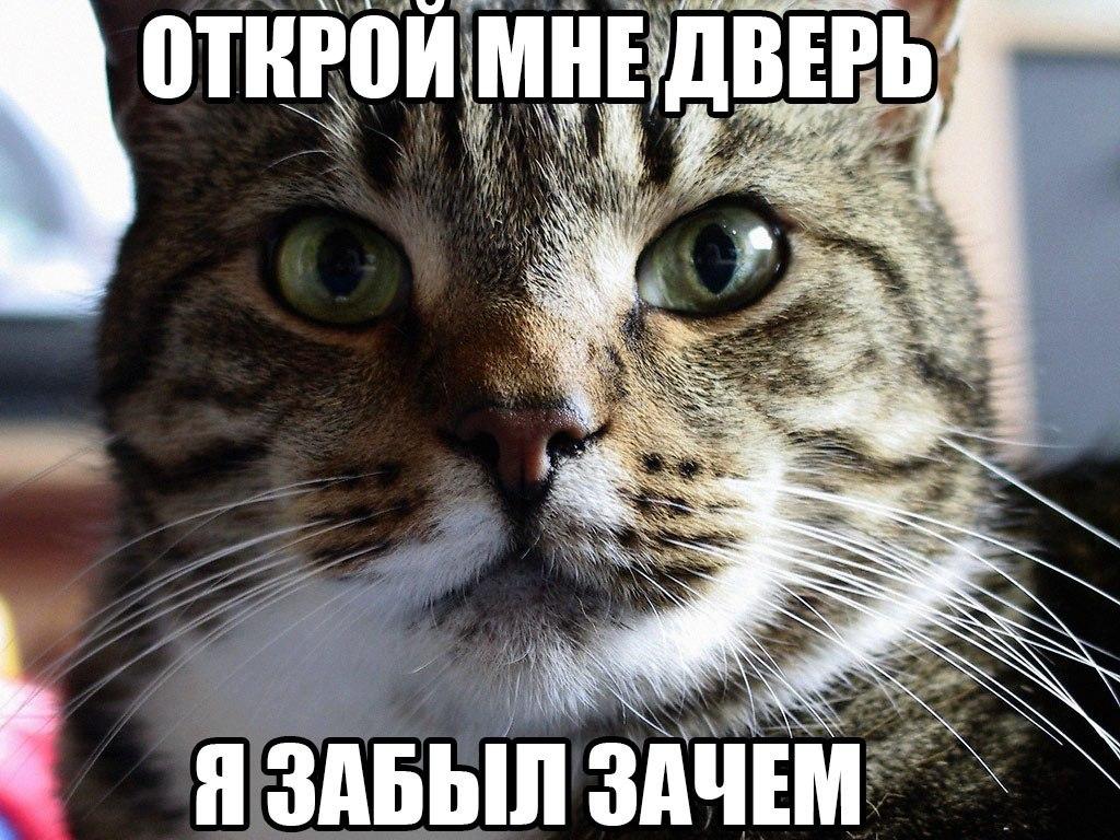 назначении, зачем картинки с котиками дизайнеры бесплатно подберут