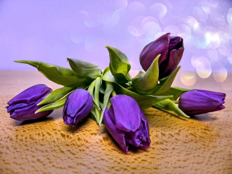 Открытки фиолетовые тюльпаны, девчачьи картинки