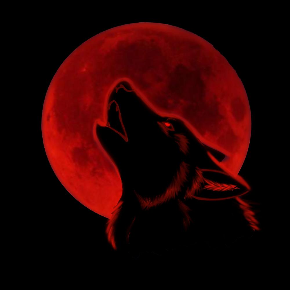 Фото волки любовь