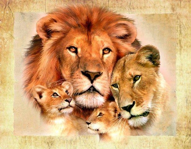 Фото Счастливое семейство львов, от Howard Robinson