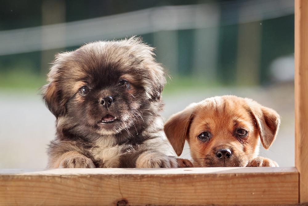 Маленькие картинки с щенками