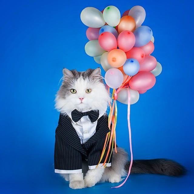 потолки картинки с днем рождения котик с шариками именно