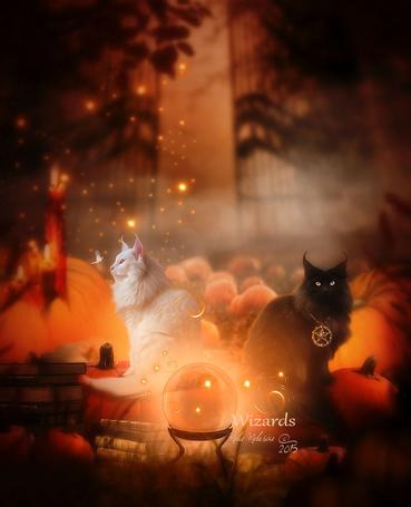 Фото Черная и белая кошки на фоне книг, магических шаров и тыкв,(Wizards / Маги), by MelieMelusine