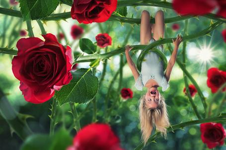 Фото Маленькая девочка висит на кусте роз