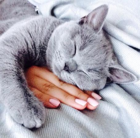Фото девушки спит красиво