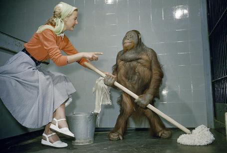 Фото Девушка уборщица учит орангутанта мыть полы