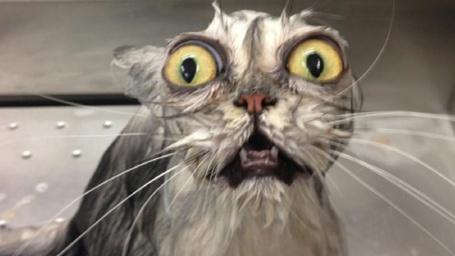 Фото Мокрый кот с выпученными глазами