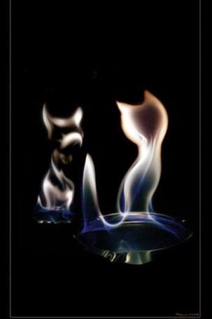 Фото Кошечка, созданная пламенем газовой горелки, смотрит на свое отражение в зеркале, фотограф Адиль Кусов