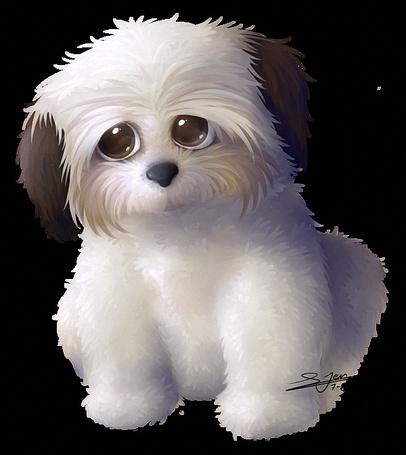 Фото Белая лохматая собачка с большими глазами и с черными ушками, by LLoryZ