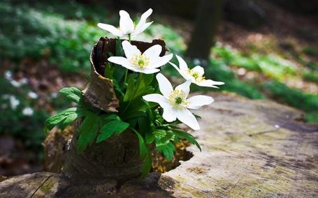 Фото Белые цветы растут из коры дерева