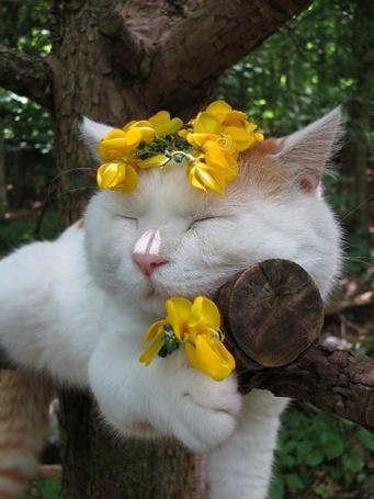 Фото Спящий на дереве кот с желтыми цветами на голове