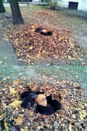 Фото Кошки греются осенью в кучах опавшей листвы