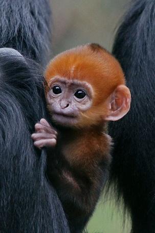 Фото Детеныш обезьяны с любопытным взглядом