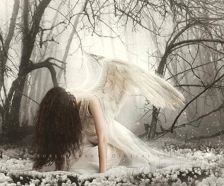 Фото Девушка-ангел среди белых цветов, by Aeternum-Art