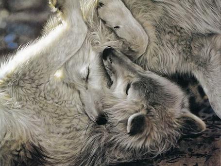 Фото Нежность белых волков, by Lesley Harrison