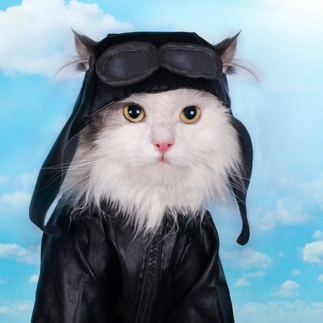 Фото Кот в кожаной курточке, шлеме и авиаторских очках на фоне неба с облаками
