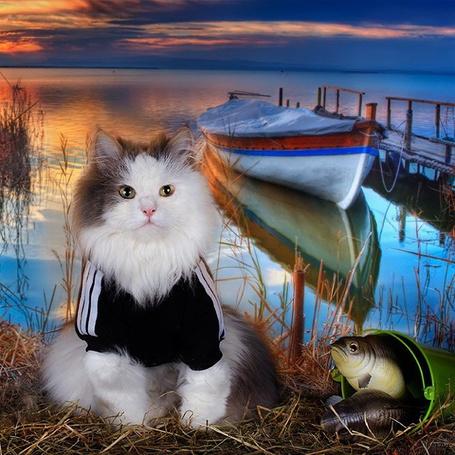 Фото Кот сидит рядом с ведром с рыбой на фоне лодки, мостков и реки на закате