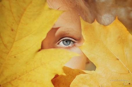 Фото Девушка за осенними листьями, ву Ольга Лебедева