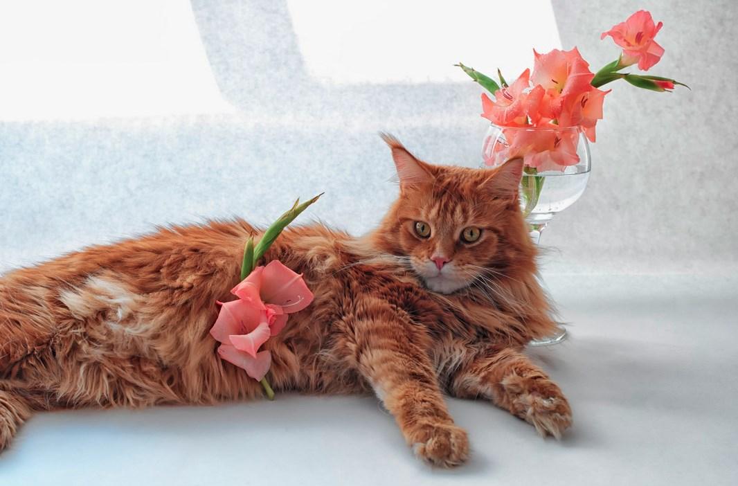 введены поздравления с кошками мейн-кун пройдет