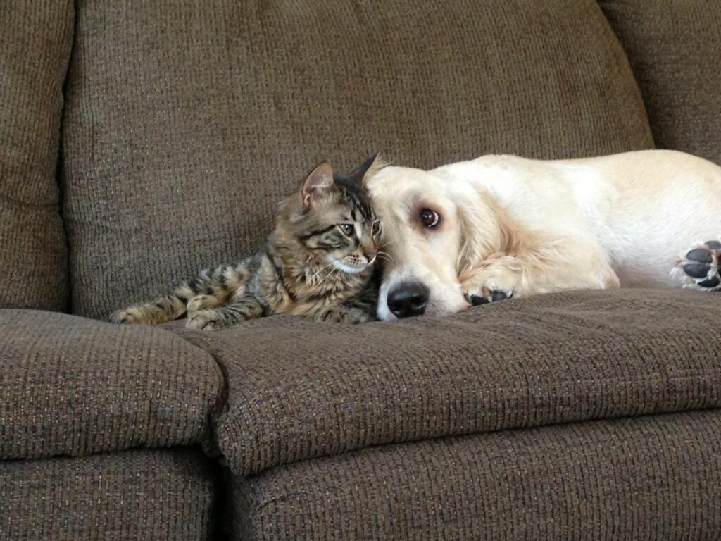 Приколы кошек и собак картинки