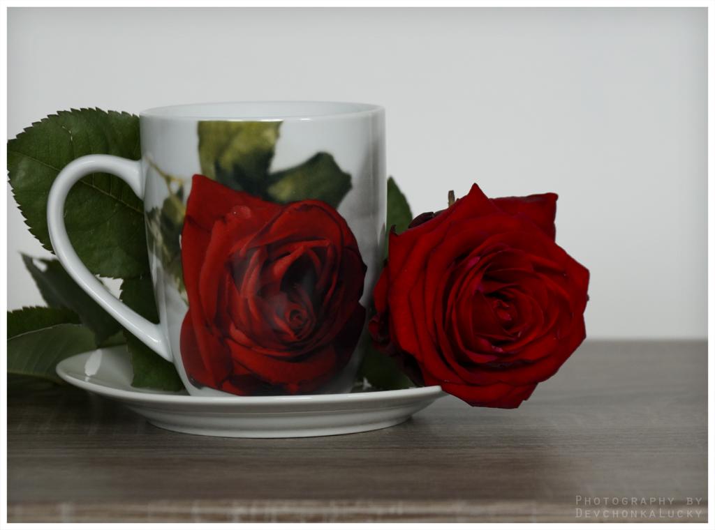 Фото Чашка с нарисованной розой и рядом лежащей живой розой, by devchonkalucky