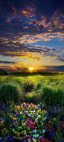 Фото Закат солнца над полем, ву Phil Koch
