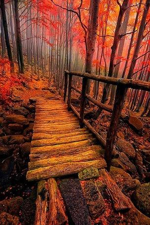 Фото Старый мостик в осеннем лесу