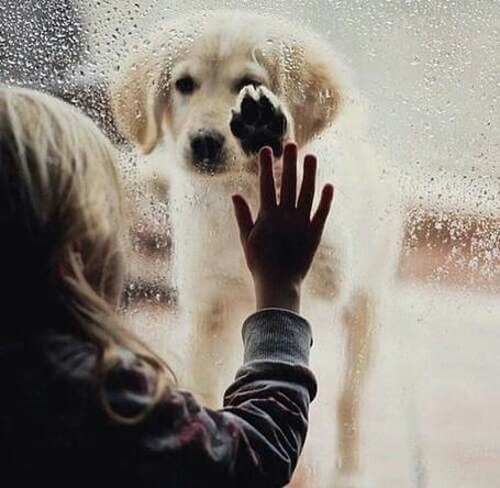 Фото Девочка держит руку на окне, за которым собака под дождем положила лапу на стекло