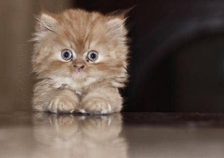 Фото Удивленный бело-рыжий котенок