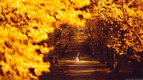 Фото Влюбленная пара, жених и невеста стоят на дороге между осенних деревьев, фотограф Антон Кузнецов