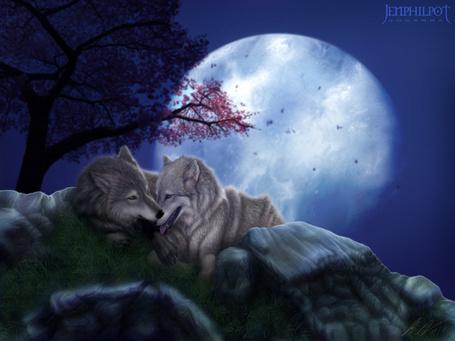 Фото Влюбленные волки на фоне полной луны, by jocarra