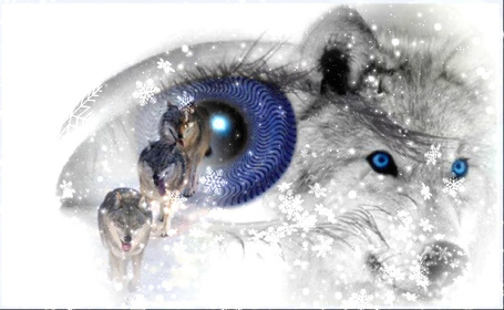 Фото На фоне глаза девушки изображены волки под падающими снежинками