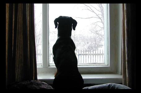 Фото Пес сидит и смотрит в окно, на зимний пейзаж