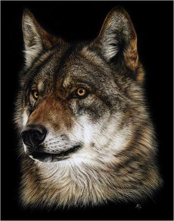 Фото Гордый, красивый волк с независимым взглядом, румынская художница самоучка - Cristina Penescu